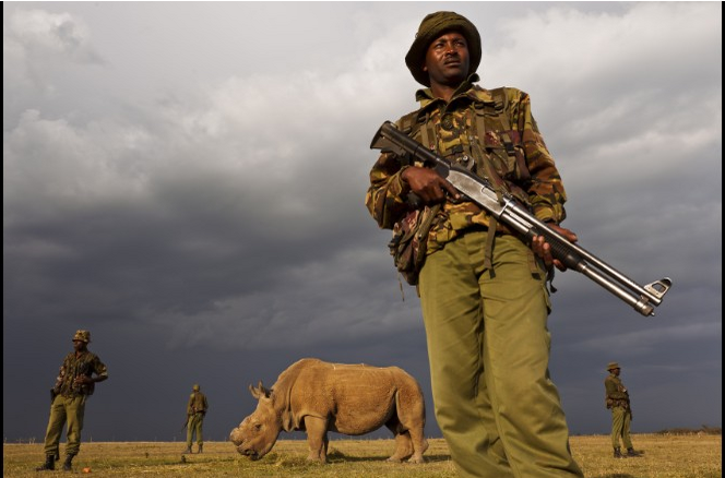 The last known male northern white rhino receives 24-hour protection
